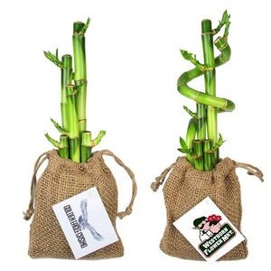 5 Lucky Bamboo Spiral Stalks in Burlap Bag